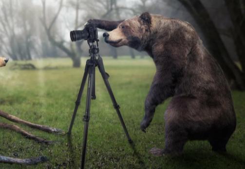 Медведю надоела слежка