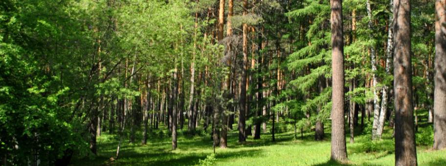 Лес полон нарушений